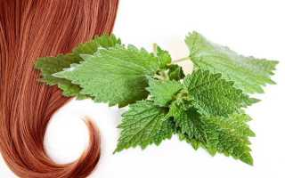 Крапива от выпадения волос: полезные рецепты отваров для ополаскивания